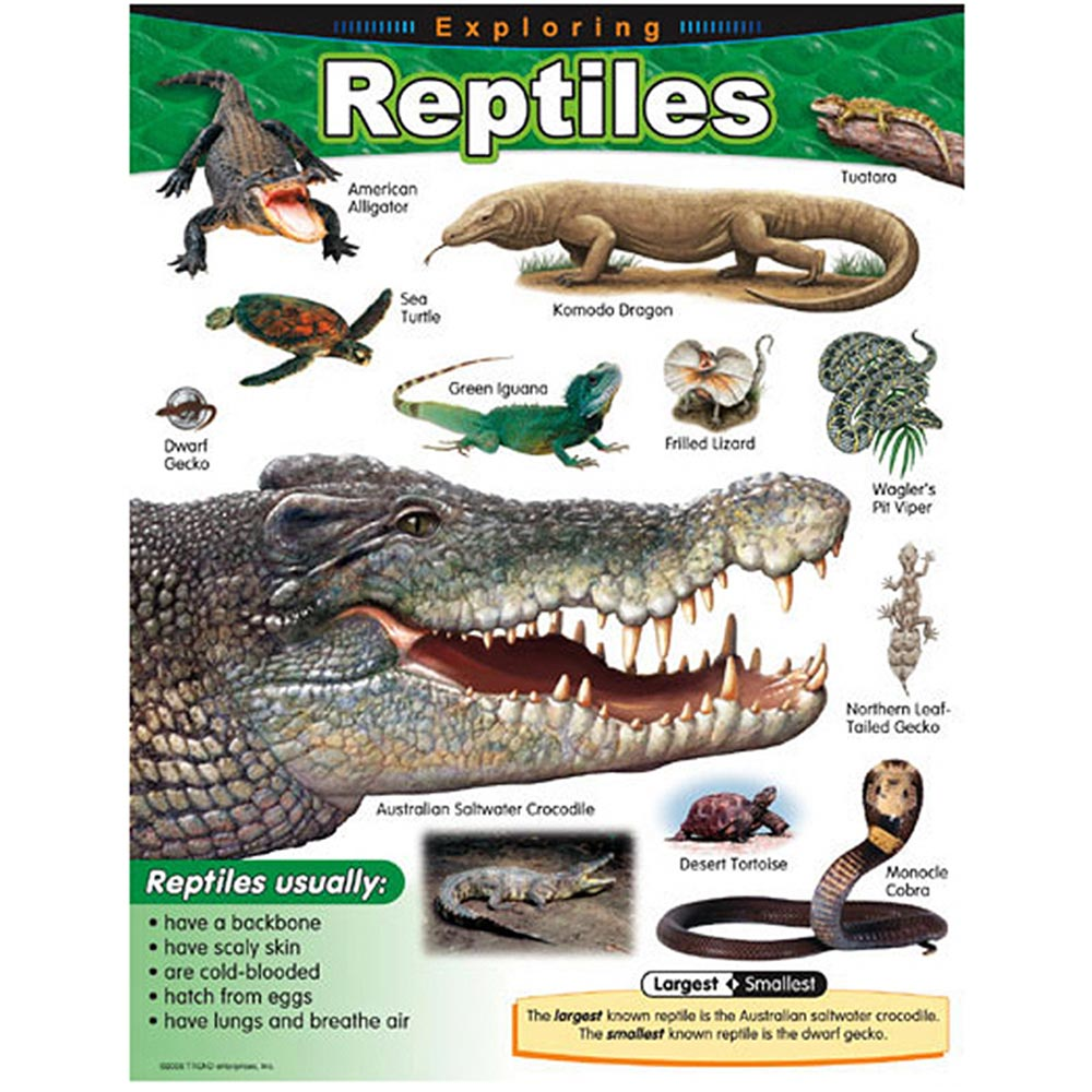 Exploring Reptiles Learning Chart Trend Enterprises Inc. T ...