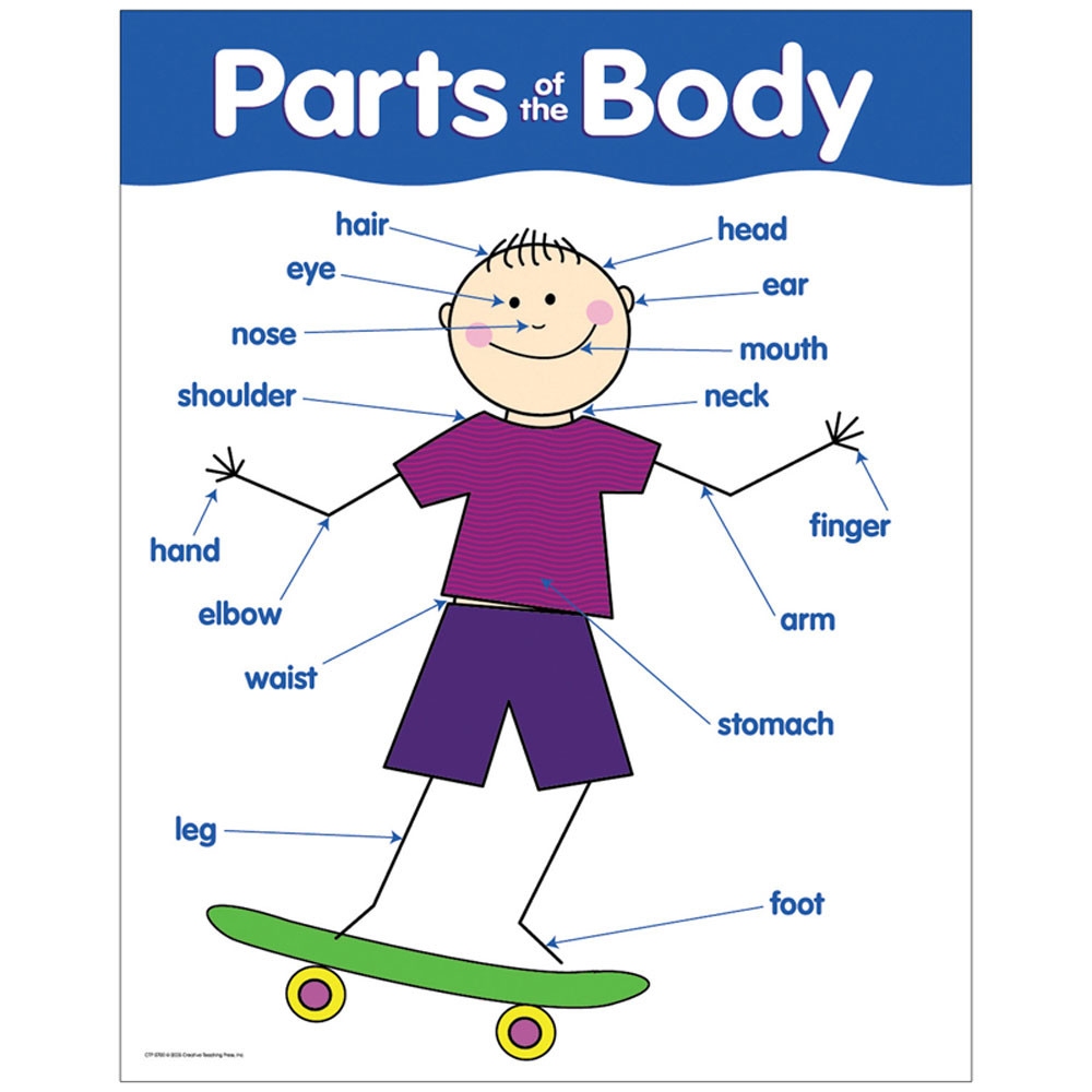 Parts Of The Body Basic Skills Chart Ctp5700 Creative Teaching