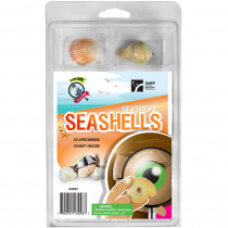 AEP2967 - Explore With Me Seashore Seashells in Earth Science