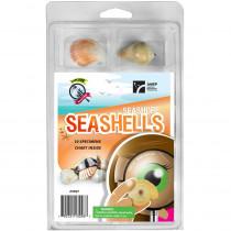AEP2967 - Explore With Me Seashore Seashells in Earth Science
