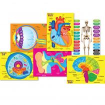ASH40027 - Human Body Foam Manipulat Human 6Pc in Human Anatomy