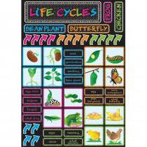 ASH77100 - Life Cycles Magnetic Mini Bulletin Board Set in General