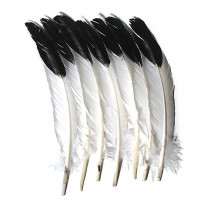 CK-4512 - Imitation Eagle Feathers in Feathers