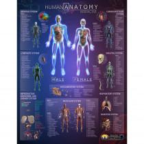 IEPIHACB - Human Anatomy Interact Smart Chart in Science