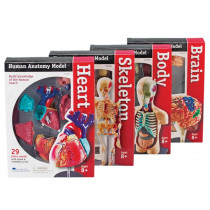 LER3338 - Model Anatomy Bundle Set Of 132 in Human Anatomy