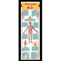 MC-V1660 - Systems Of The Body Colossal Poster in Science
