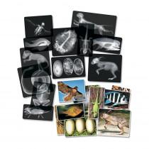 R-5910 - Animal X-Rays in Animal Studies