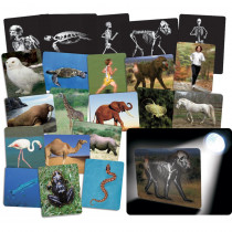 R-59250 - Whats Inside Animals in Animal Studies