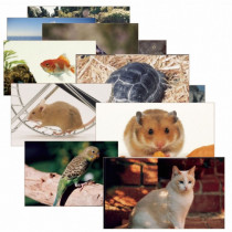 SLM155 - Pets 14 Poster Cards in Miscellaneous
