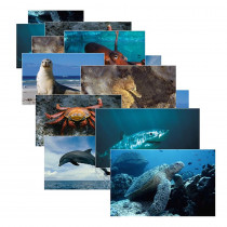 SLM157 - Sea Life 14 Poster Cards in Oceanography
