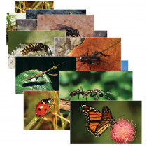 SLM158 - Insects 14 Poster Cards in Science