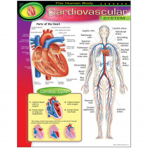 T-38090 - Chart Cardiovascular System in Science