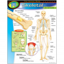 T-38093 - Chart Skeletal System Gr 5-8 17X22 in Science