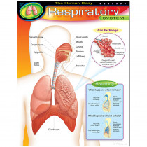 T-38094 - Chart Respiratory System in Science