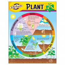 T-38179 - Chart Life Cycle Of A Plant K-3 in Science