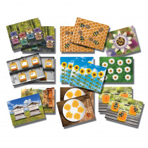 YUS1095 - Honey Bee Early Number Cards in Numeration
