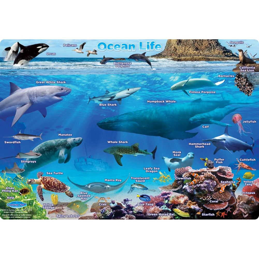 "Smart Poly Single Sided PosterMat Pals, Ocean Life, 12 x 17.25"" - ASH95201 