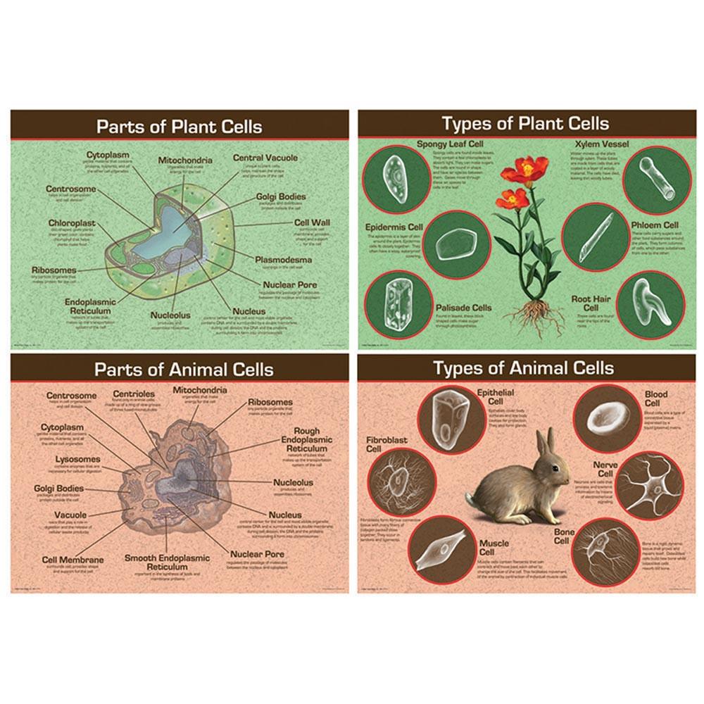 CD-410056 - Animal & Plant Cells Bulletin Board Set in Science