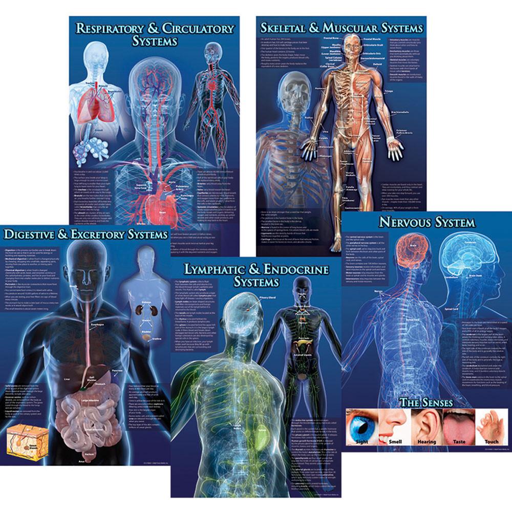 CD-410065 - Human Body Facts Bulletin Board Set in Science