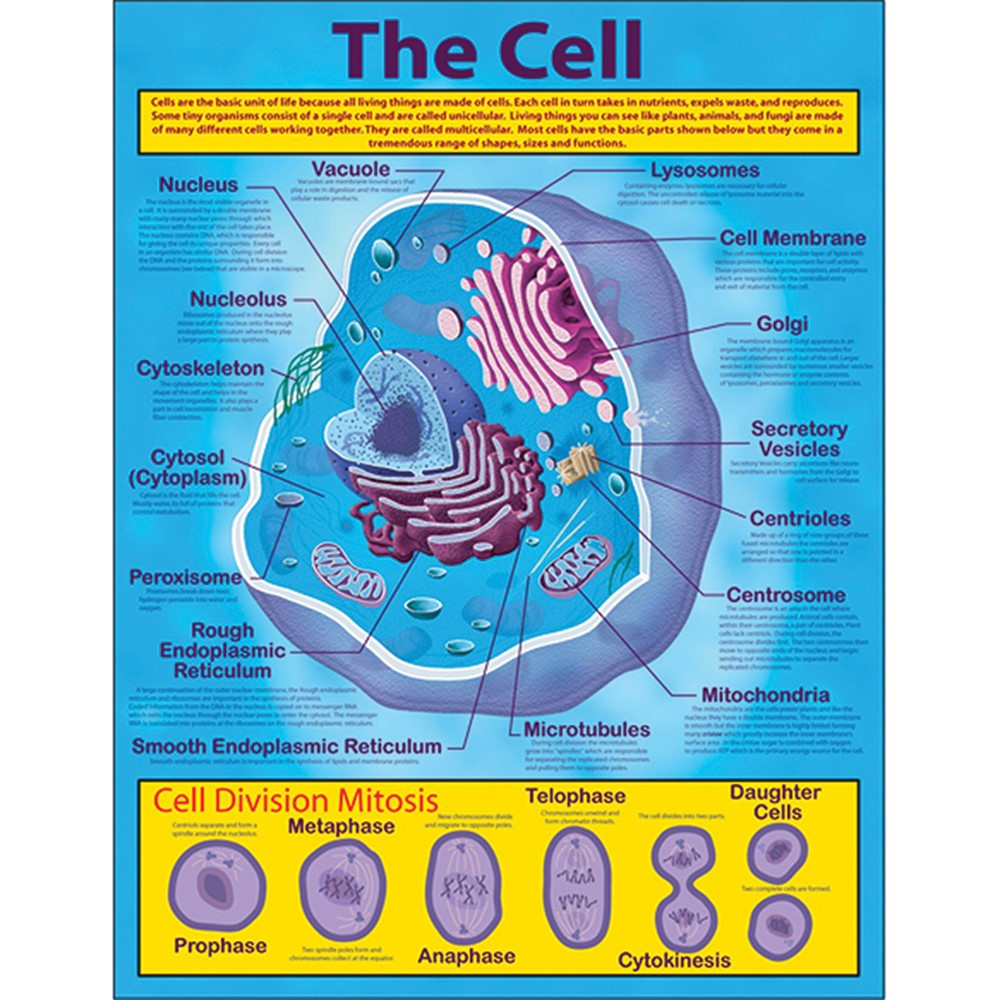 CD-414019 - The Cell Chartlet in Science