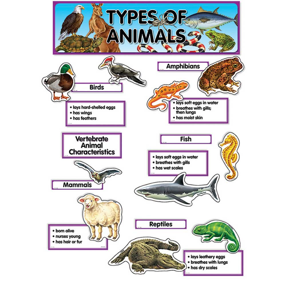 Types Of Animals Mini Bulletin Board Set Ctp1763