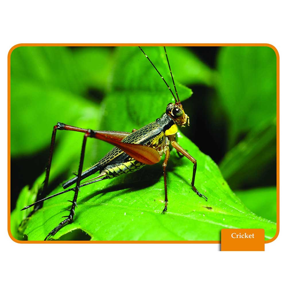 EP-3449 - Science Reading Comp Cards Insects in Animal Studies