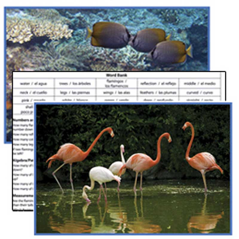EP-3471 - Animals Literacy Cards in Reading Skills