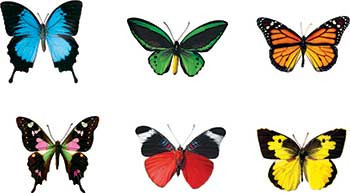 T-10835 - Butterflies Discovery Mini Accents Variety Pack 6 Designs 36/Pk in Accents
