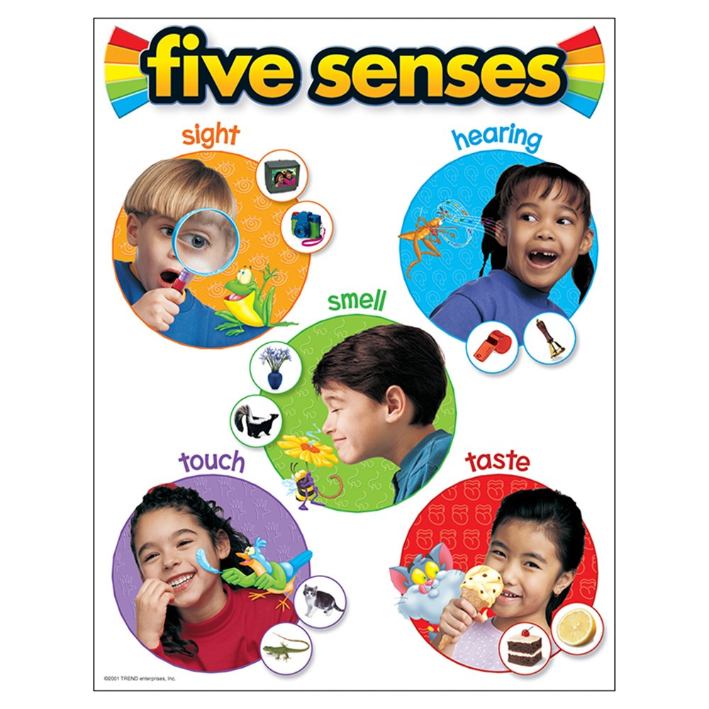T-38051 - Chart Five Senses 17 X 22 Gr Pk-2 in Science