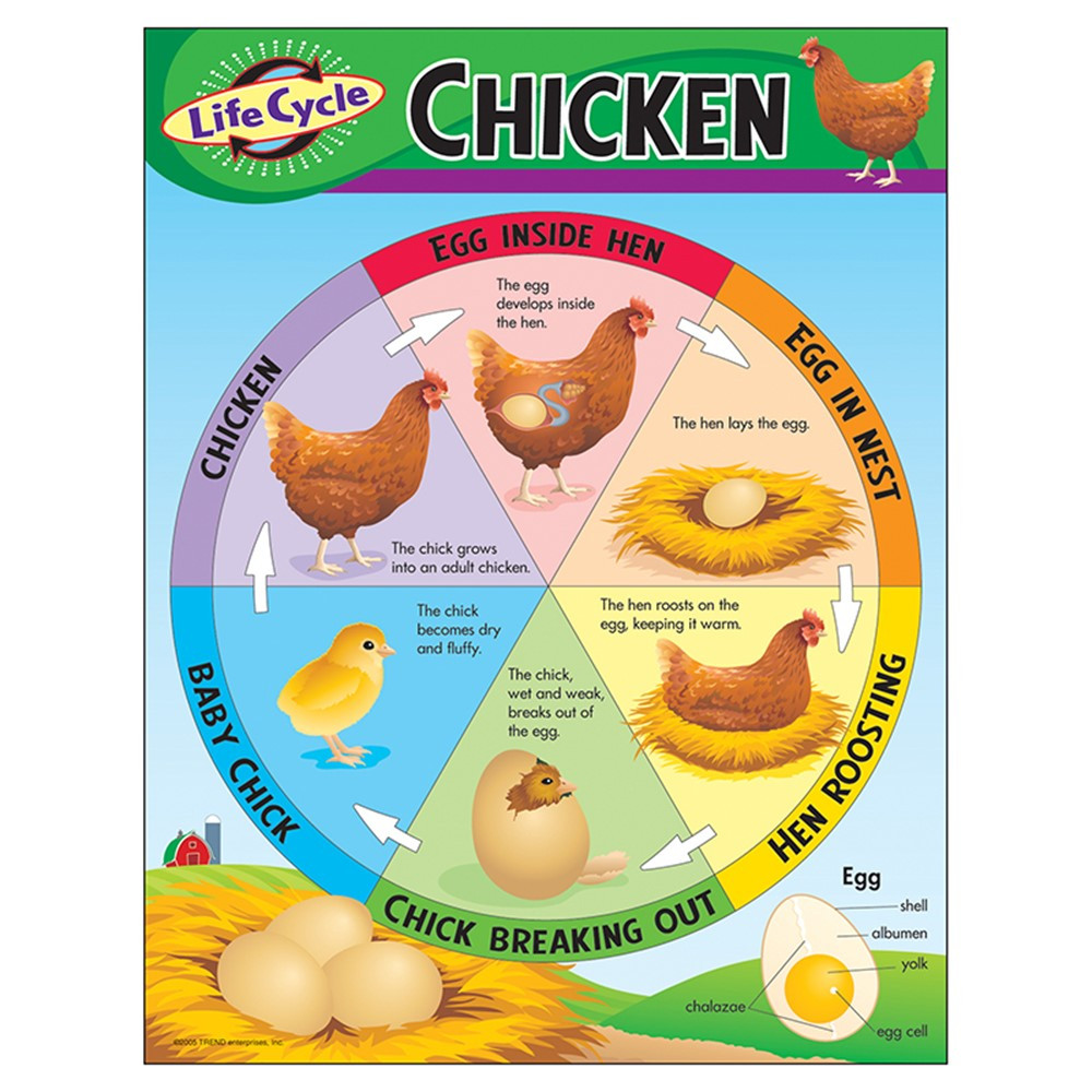 T-38153 - Chart Life Cycle Of A Chicken in Science