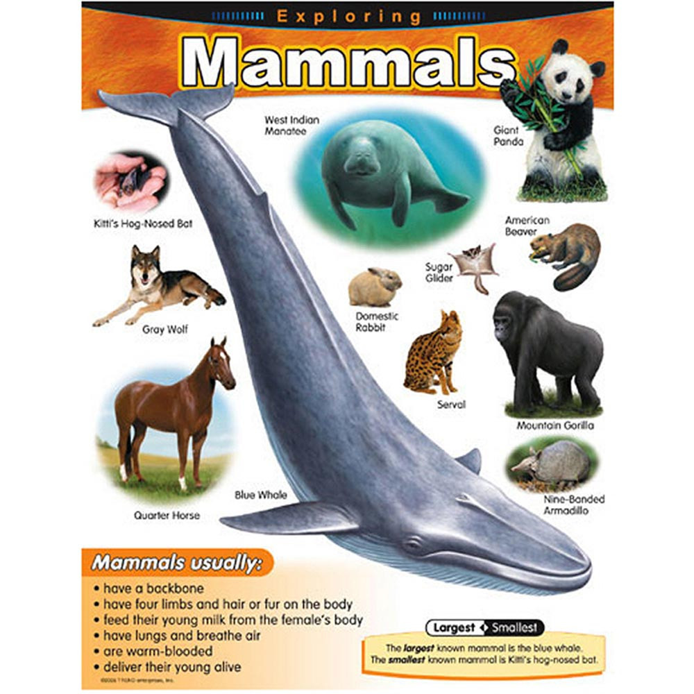 T-38185 - Chart Exploring Mammals Gr 1-5 in Science