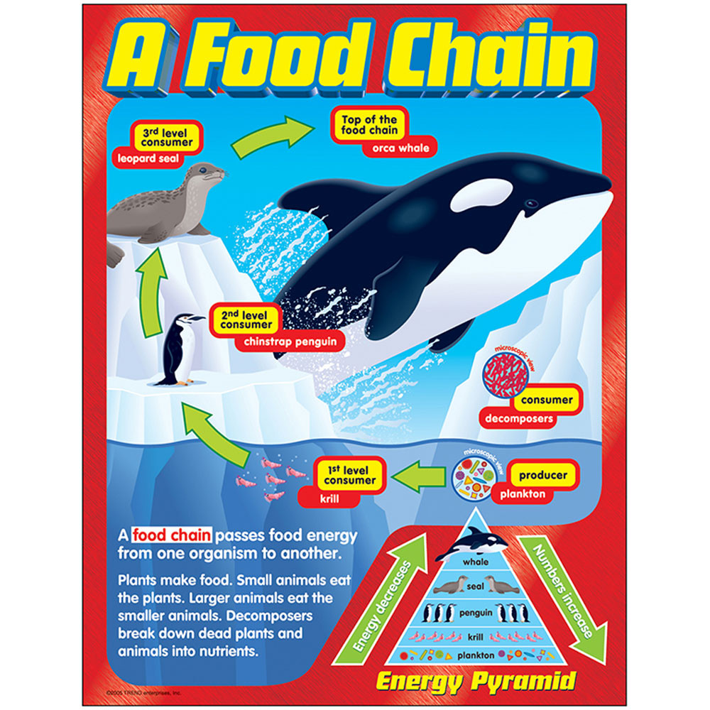 T-38186 - Chart A Food Chain Gr 2-5 in Science