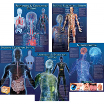 CD-410065 - Human Body Facts Bulletin Board Set in Science