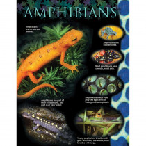 CTP1166 - Amphibians Small Chart in Science