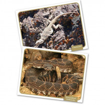 EP-3455 - Reptiles Amphibns Science Cards in Life Science