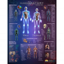 IEPIHACB - Human Anatomy Interact Smart Chart in Science