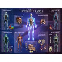 Human Anatomy Smart Mats, Set of 4 - IEPSMHA | Popar Toys | Human Anatomy