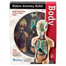 LER3336 - Model Human Body Anatomy in Human Anatomy