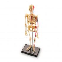 LER3337 - Model Skeleton in Human Anatomy