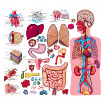 LFV22312 - The Human Body & Anatomy Flannelboard Set in Science