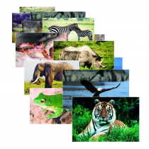 SLM151 - Wild Animal Poster Set Set Of 10 in Science