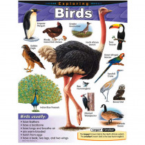 T-38180 - Chart Exploring Birds Gr 1-5 in Science