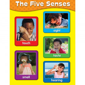 The Five Senses Chart