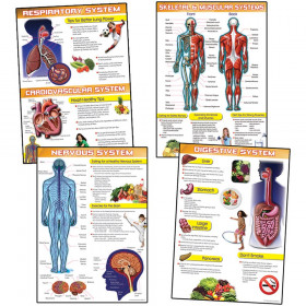 Human Body and Health Tips Bulletin Board Set