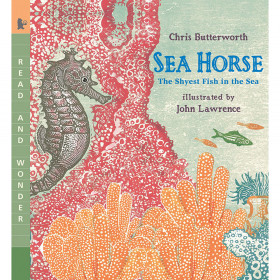 Sea Horse The Shyest Fish In The Sea
