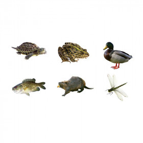 Fresh Water Animals Bb Accent