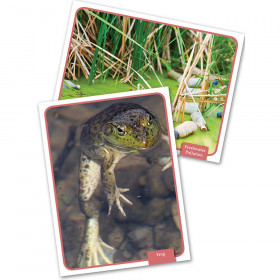 Freshwater Habitat Science Cards