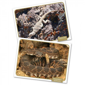 Reptiles Amphibns Science Cards