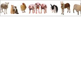 Farm Animals Photo Border