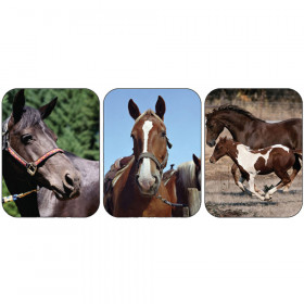 Horses Real Photos Giant Stickers